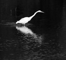 Egret Mirror by Lisa Cook