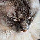 Sleepy Ragdoll by Carol Bleasdale