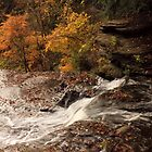 Falls at Wolf Creek by Lisa Cook