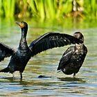Cormorant World by imagetj
