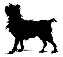 Scruffy Dog Silhouette Photographic Print