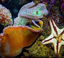 Underwater World by venny