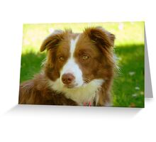 Agility & Intensity Are My Middle Names!! - Border Collie - NZ Greeting Card