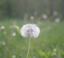 White Dandelion by LaurenRo