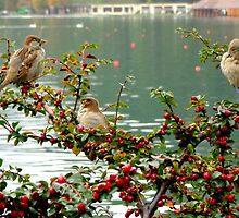 Lake Bled Birds by christazuber