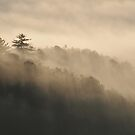 foggy tree line by dc witmer