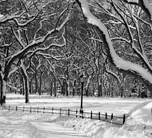 Central Park, NYC Blizzard by Alberto  DeJesus