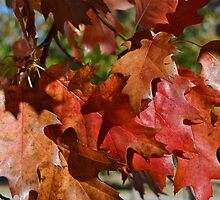 LOVELY BRIGHT RED FALL LEAVES by CHERIE COKELEY
