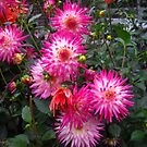 October Dahlias by MarianBendeth