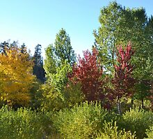 BEAUTIFUL MEADOW OF FALL COLORS by CHERIE COKELEY