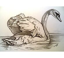 Swan drawing Photographic Print