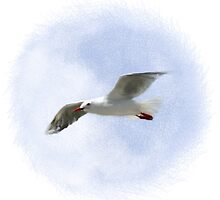 Gliding Gull by boothart