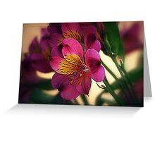 Alstroemeria - Little Lily Greeting Card