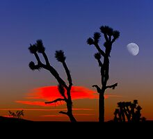 Sunset Over Mojave National Preserve 2 by Alex Preiss