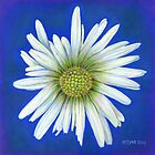 A simple daisy by Marion Yeo