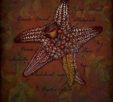 Starfish Anatomy by rcaauwe