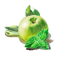 Green Apple And Mint Leaves by Irina Sztukowski