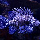 Lionfish by Asoka