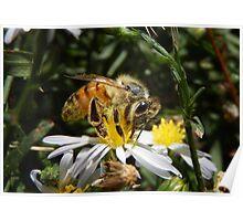 Bee Seen Poster