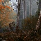Bushland Melody - Mount Wilson NSW - The HDR Experience by Philip Johnson