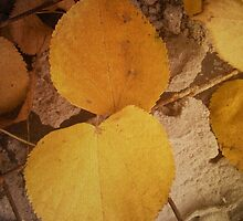 Two autumn leaves by AnnArtshock