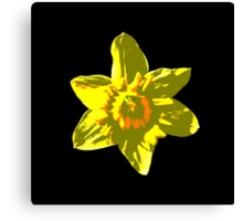 Daffodil on Black Canvas Print