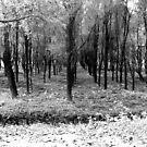 Autumn woods bw by borjoz
