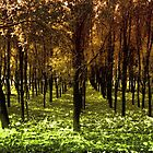 Autumn woods col 2 by borjoz