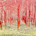 Autumn woods color electric by borjoz