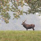 Sika Deer Stag by Ashley Beolens