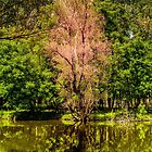Autumn tree colorful by borjoz