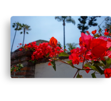 Red Bougainvillea | Mission San Juan Capistrano Canvas Print