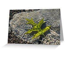 Green Sunshine - a Jade Colored Oak Leaf on the Rocks Greeting Card