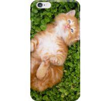 Puppy red cat iPhone Case/Skin