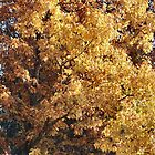 Tones of Gold by Keala