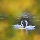 Love couple  by Remo Savisaar