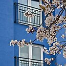Spring, Walton-on-Thames by Rachael Talibart