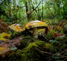 Amanita Wild Mushrooms by Charles & Patricia   Harkins ~ Picture Oregon