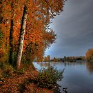 It's My Season ~ Fall Colors ~ by Charles & Patricia   Harkins ~ Picture Oregon