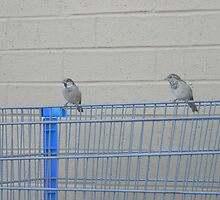 free brothers birds  by cory naden