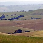 Gippsland Pastoral by Harry Oldmeadow
