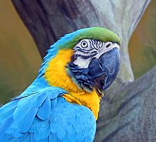Blue Macaw by ElderTreePhoto