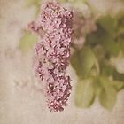Lilacs #2 by Tracy Edgar