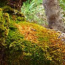 Moss on the Bark by kalaryder