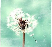Washed Out Dandelion in Green by LLStewart