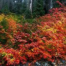 On The Other Side Of The Hill ~ Fall Colors ~ by Charles & Patricia   Harkins ~ Picture Oregon