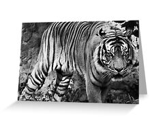 Angry tiger Greeting Card