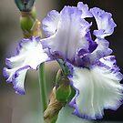 Purple Edges by Monnie Ryan