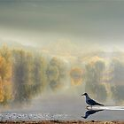 Autumn Reflections by Igor Zenin