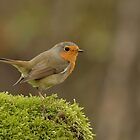 Robin - II (Erithacus rubecula) by Peter Wiggerman